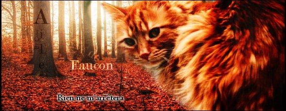 Aile de Faucon  Guerrier - Cieux  Aile_d11
