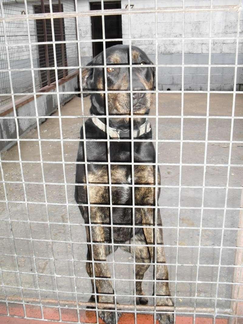 [URGENT AVANT EUTHA] Le refuge affiche complet - 4 chiens vous attendent ! (Picardie) - Page 2 Sdc13910