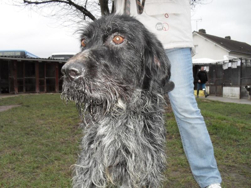 [URGENT AVANT EUTHA] Le refuge affiche complet - 4 chiens vous attendent ! (Picardie) - Page 2 Sdc13911