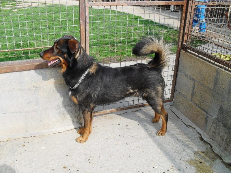 [URGENT AVANT EUTHA] Le refuge affiche complet - 4 chiens vous attendent ! (Picardie) - Page 2 Sdc14316
