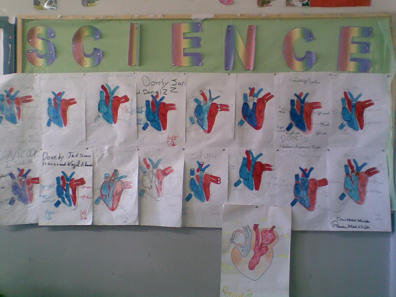 Grade 5 A- The Heart Model Image017