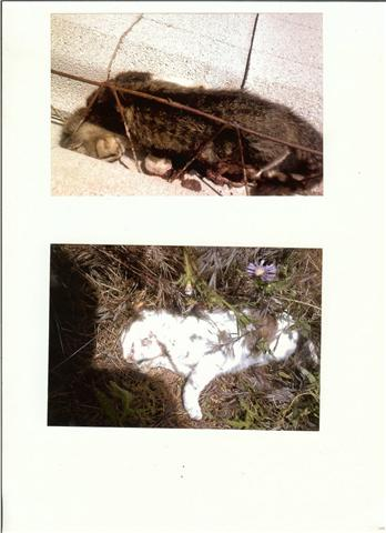 La GUARIDA - Guarda de Caza pillado asesinando gatos caseros 121