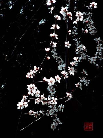 Phong Hoa Tuyết Nguyệt - 4 CD hoà tấu 210