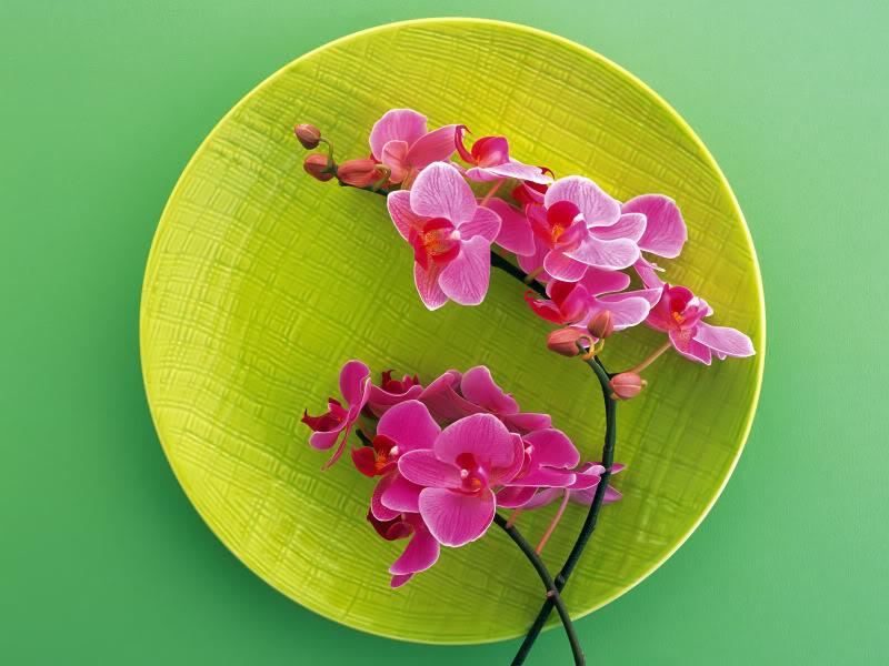 Hoa trên dĩa Hydc_120