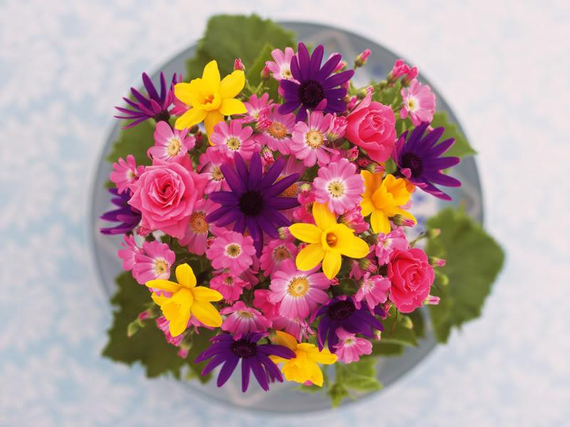 Hoa trên dĩa Hydc_126