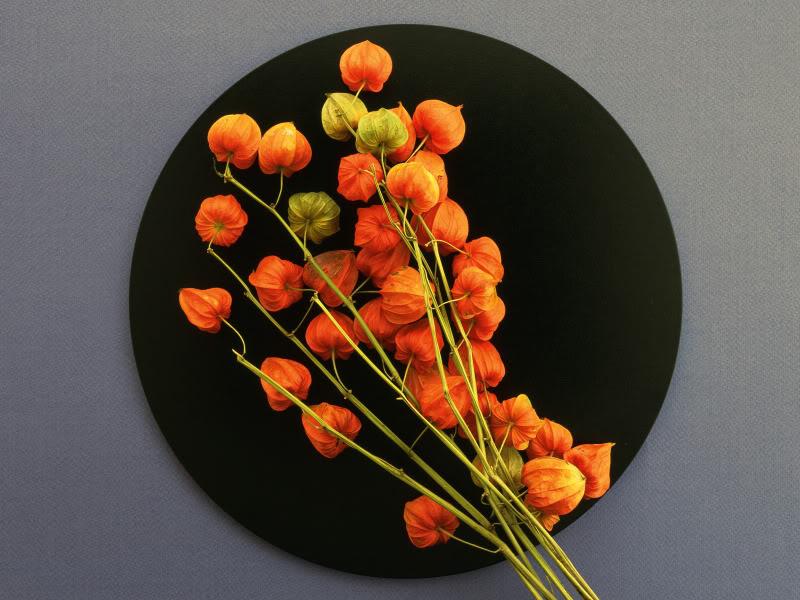 Hoa trên dĩa Hydc_128