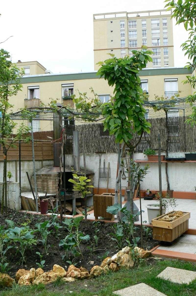 jardin potager P1140014