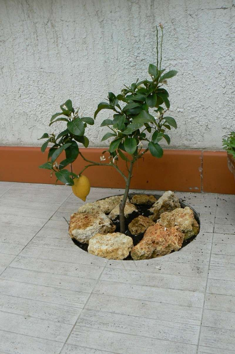 jardin potager P1140015