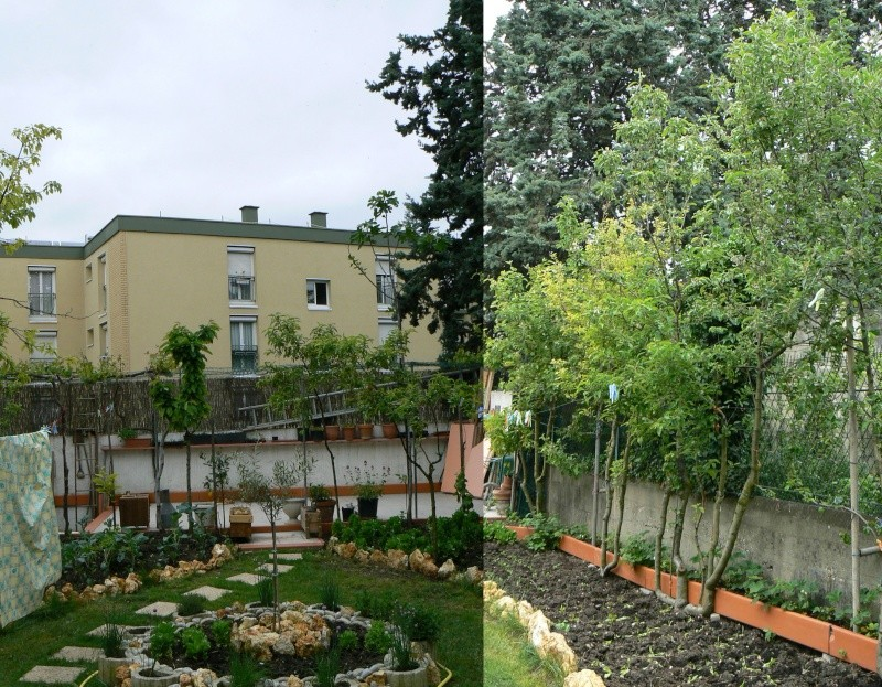 jardin potager P1140017