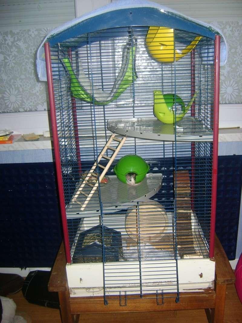 Photos de vos cages Photo_24