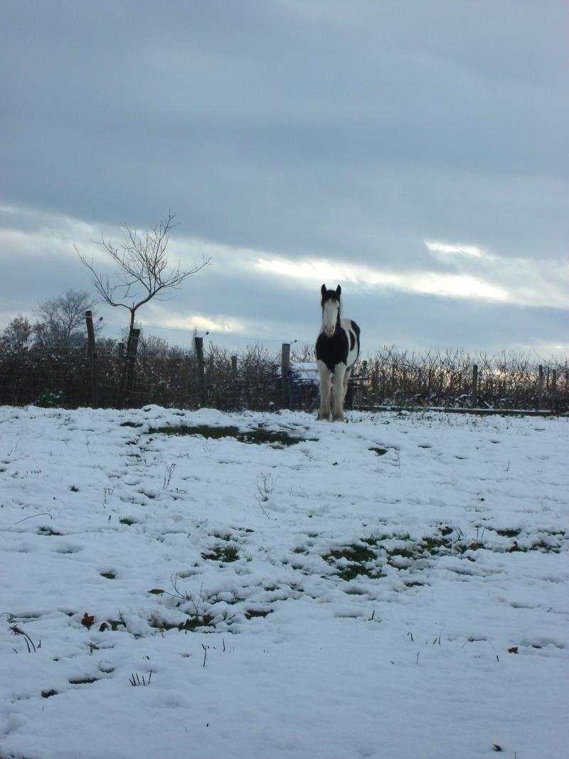 Premières neiges pour Léo! photos pg 3 01-12-14