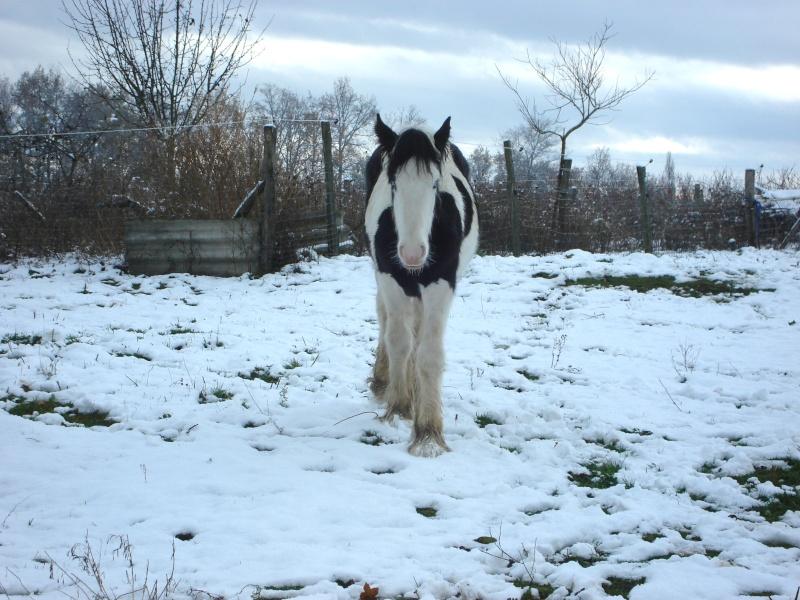 Premières neiges pour Léo! photos pg 3 01-12-15