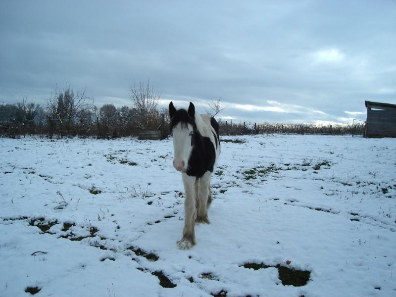 Premières neiges pour Léo! photos pg 3 01-12-16