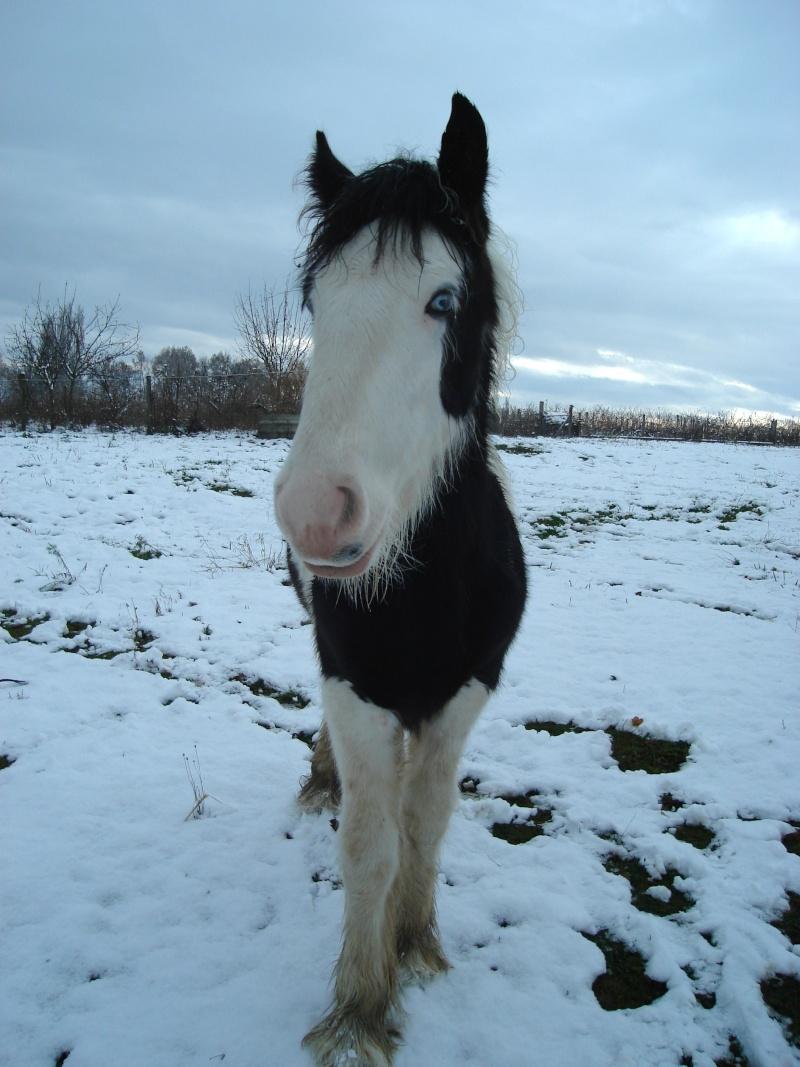 Premières neiges pour Léo! photos pg 3 01-12-17