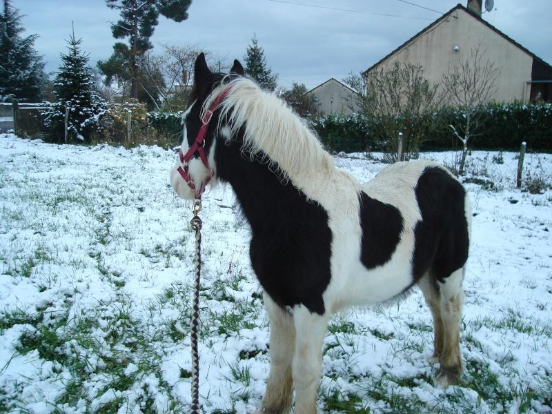 Premières neiges pour Léo! photos pg 3 01-12-19