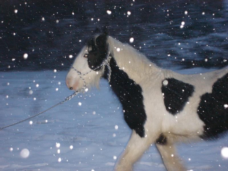 Premières neiges pour Léo! photos pg 3 01-12-22