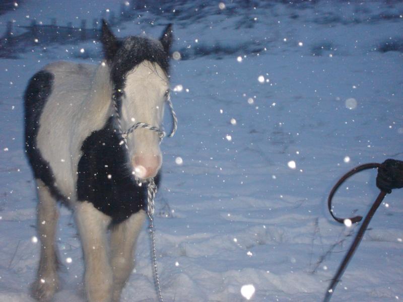 Premières neiges pour Léo! photos pg 3 01-12-23