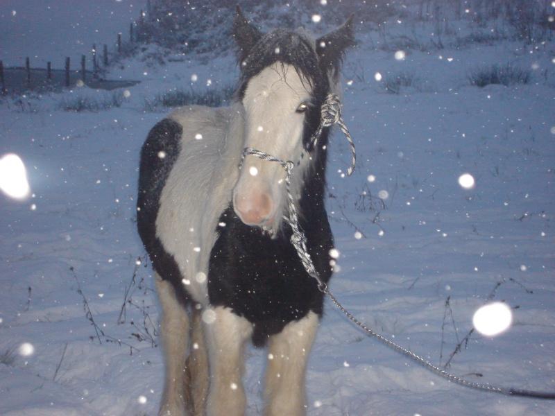 Premières neiges pour Léo! photos pg 3 01-12-24
