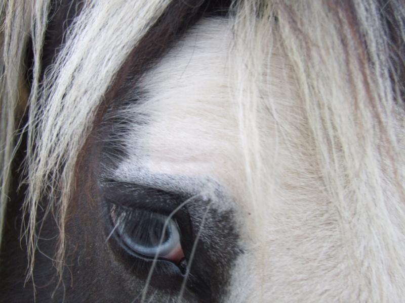 Le pie-noir aux yeux bleus 2009_110