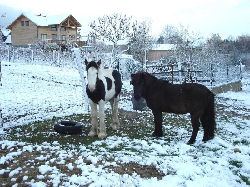 Premières neiges pour Léo! photos pg 3 Premia13