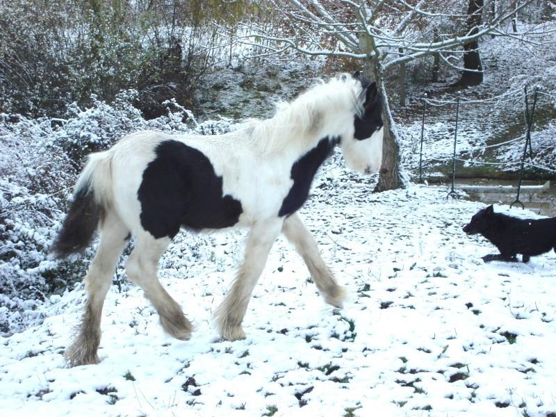 Premières neiges pour Léo! photos pg 3 Premia14