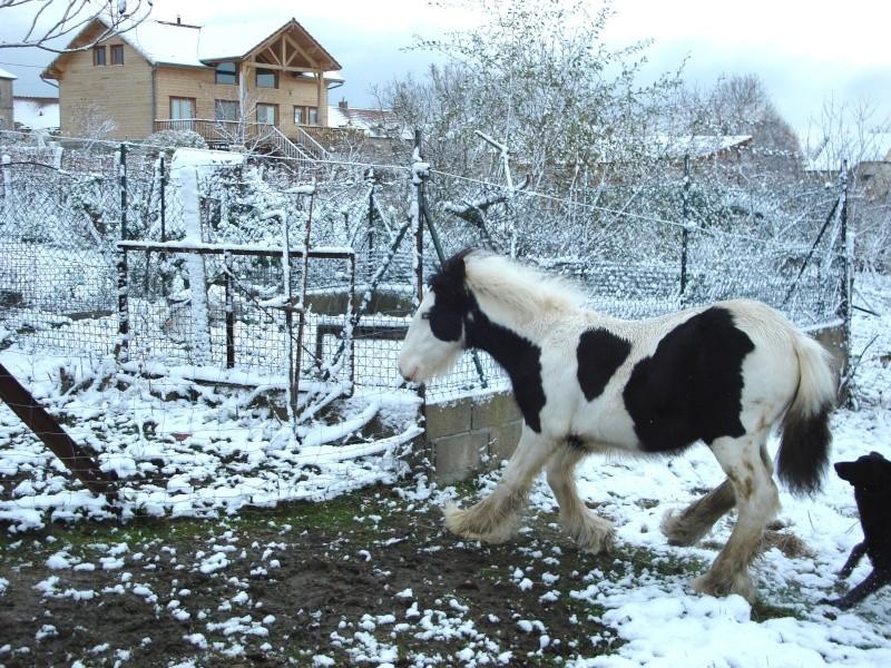 Premières neiges pour Léo! photos pg 3 Premia23