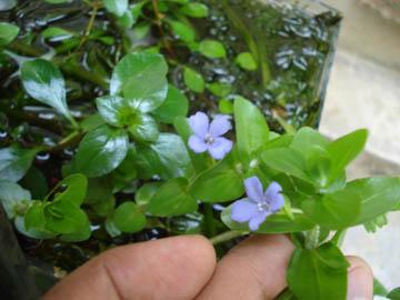 What kinda plants do you keep??? Dsc03711