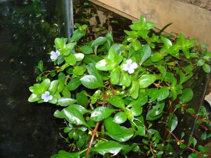 What kinda plants do you keep??? Dsc04010