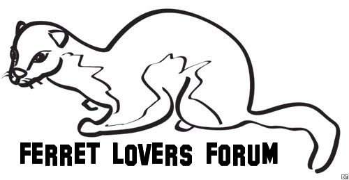 Ferret Lovers Forum