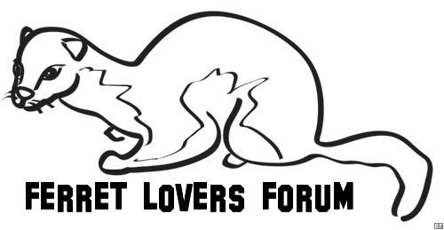 Ferret Lovers Forum