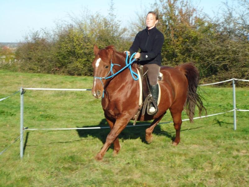Comment avez vous rencontrer/acheter votre cheval? Dsc03410