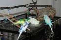 JEUX et LIEUX FAVORIS de nos oiseaux Dsc_8510