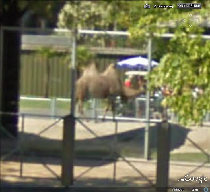 STREET VIEW : Les animaux - Page 2 Chamau10