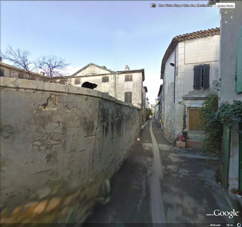 STREET VIEW : Les animaux - Page 5 Chat_210