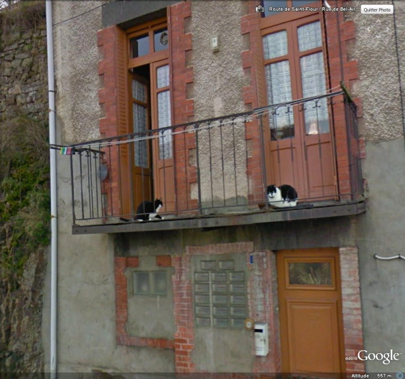 STREET VIEW : Les animaux - Page 4 Chats10