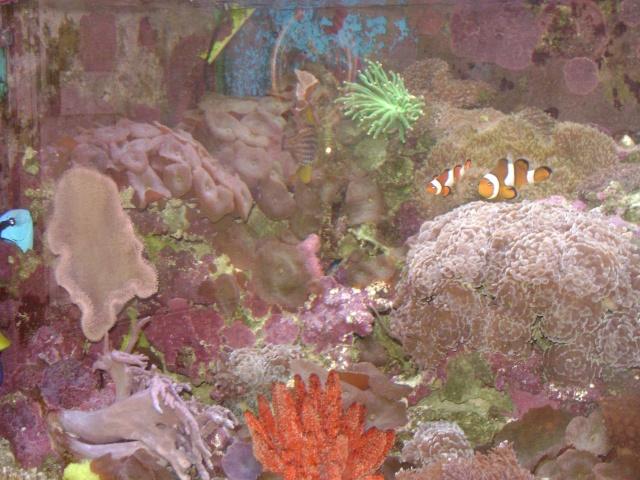 Déménagement d'un bac et de pierres vivantes + poissons lundi 1 juin 2009 Dsc08410