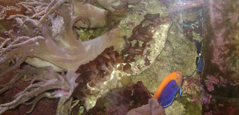 Déménagement d'un bac et de pierres vivantes + poissons lundi 1 juin 2009 Dsc08411