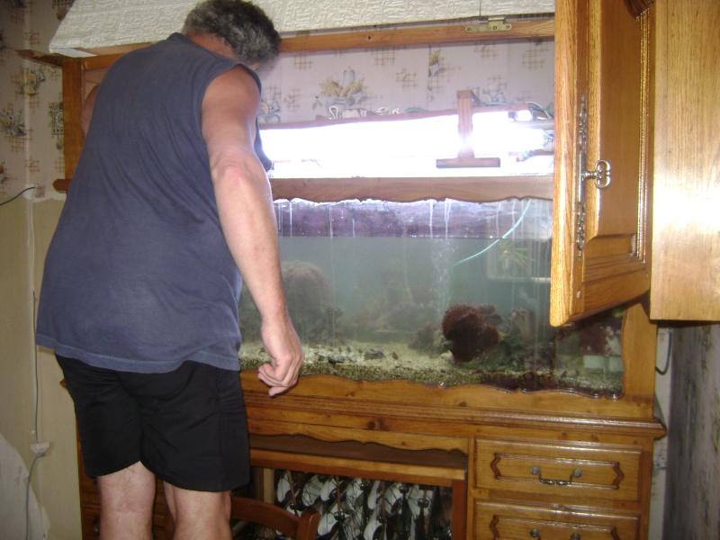 Déménagement d'un bac et de pierres vivantes + poissons lundi 1 juin 2009 Dsc08414