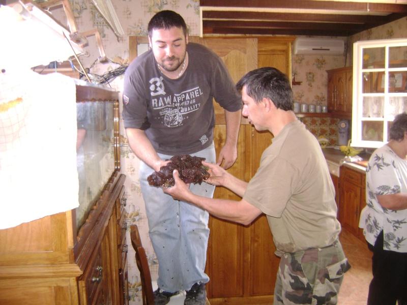 Déménagement d'un bac et de pierres vivantes + poissons lundi 1 juin 2009 Dsc08419