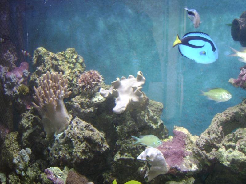 Déménagement d'un bac et de pierres vivantes + poissons lundi 1 juin 2009 Dsc08422