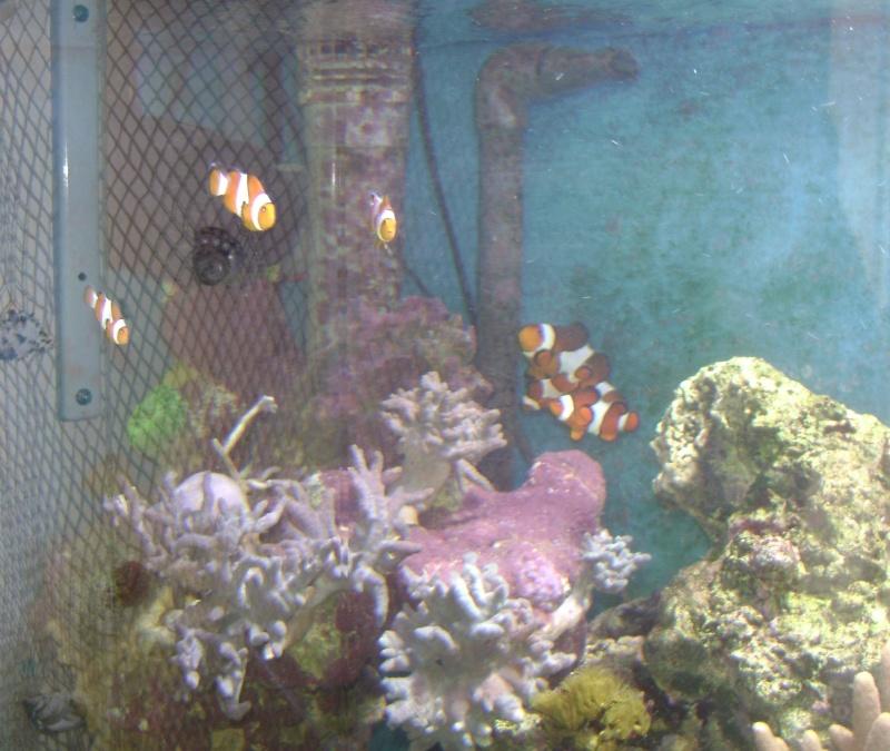 Déménagement d'un bac et de pierres vivantes + poissons lundi 1 juin 2009 Dsc08423