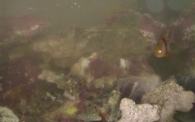 Déménagement d'un bac et de pierres vivantes + poissons lundi 1 juin 2009 Dsc08432