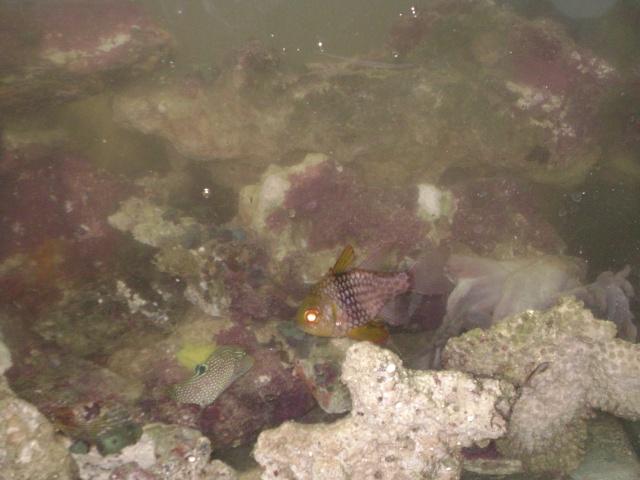 Déménagement d'un bac et de pierres vivantes + poissons lundi 1 juin 2009 Dsc08433