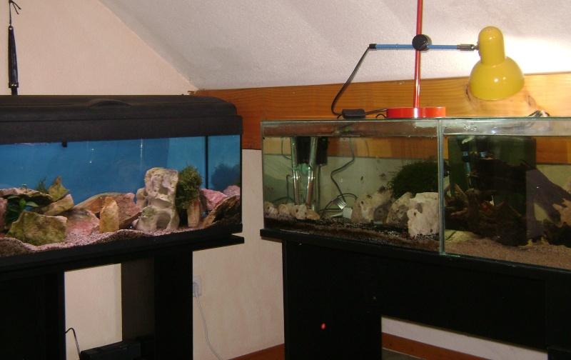 Déménagement d'un bac et de pierres vivantes + poissons lundi 1 juin 2009 Dsc08510