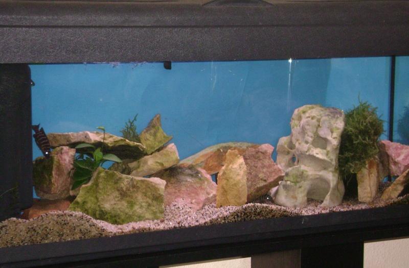 Déménagement d'un bac et de pierres vivantes + poissons lundi 1 juin 2009 Dsc08511