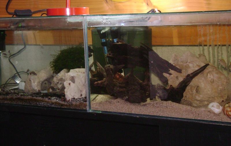 Déménagement d'un bac et de pierres vivantes + poissons lundi 1 juin 2009 Dsc08512