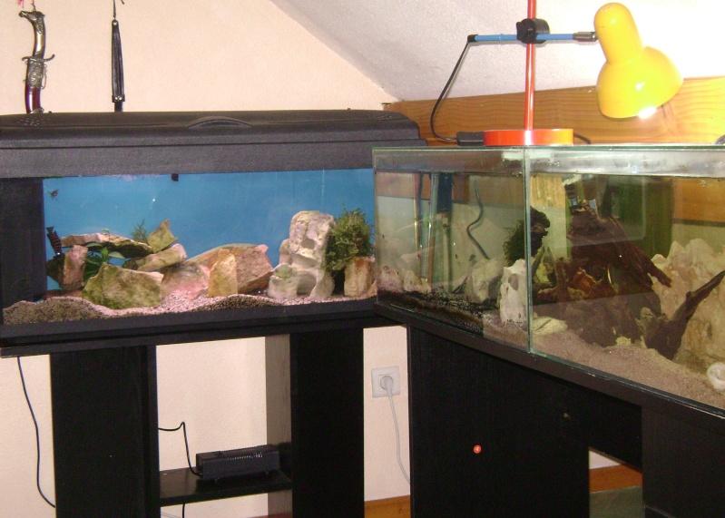 Déménagement d'un bac et de pierres vivantes + poissons lundi 1 juin 2009 Dsc08513