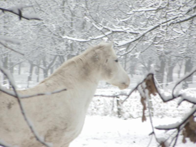 Le cheval et la neige, gagnant : Chris - Page 3 Le_26_15