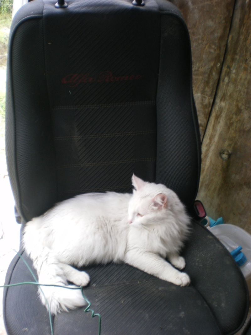 je vous presente mon  chat : bounty Toutan13