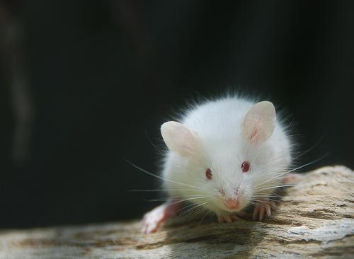 Les ratous ! 25538410